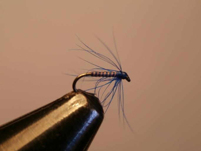 Iron Blue spider pattern