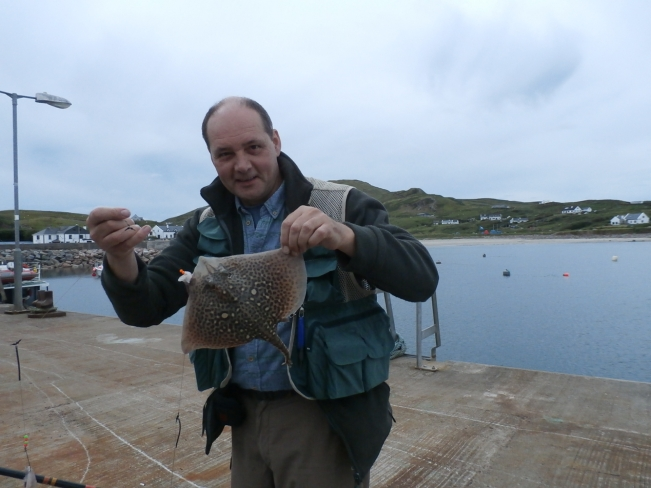 Small Thornback Ray just about to go back