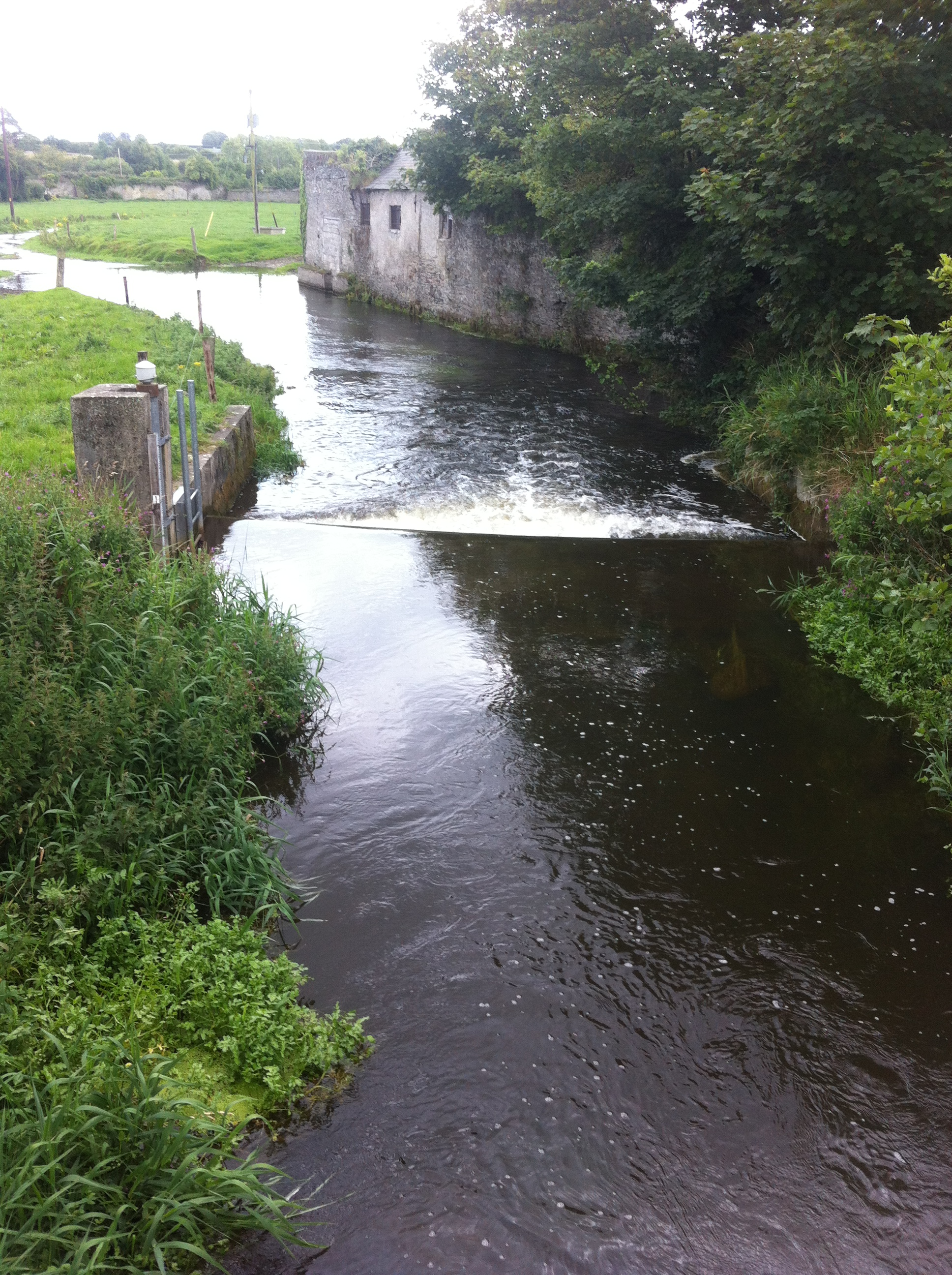The river Greese, Co. Kildare