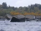 fine rocky shore