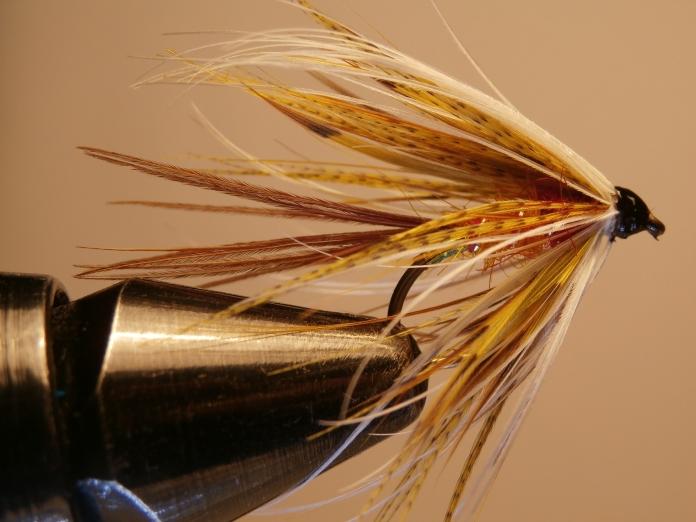 The Gull, an Irish mayfly