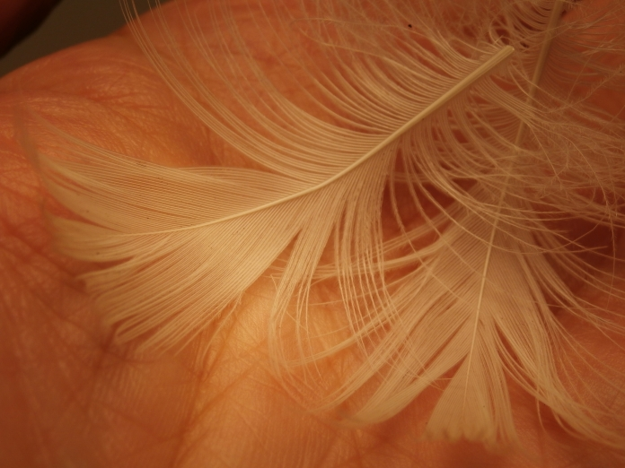 the pair pf white gull feathers